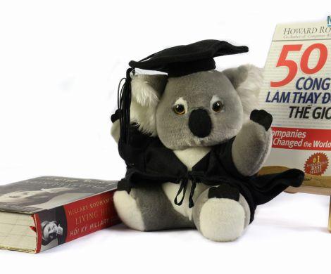 Gấu tốt nghiệp Koala mặc vest
